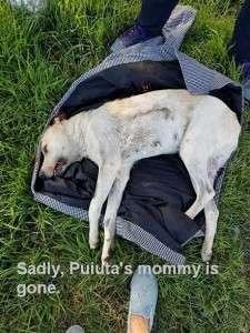 Sadly, Puiuta's mommy is gone. micuta orfana Micuta orfana 12