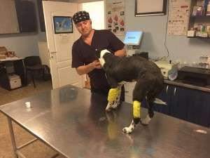 Lucy2 cu picioarele fracturate Cu picioarele fracturate Lucy2