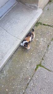Pui de pisica aruncat pe geam Pui de pisica aruncat pe geam Pui de pisica aruncat pe geam mimisor